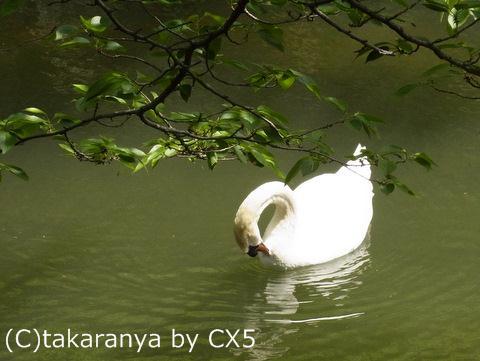 110522kurashiki7.jpg