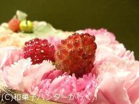 20070506/070606hibiyajushou2.jpg