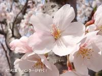 img/080406entsuji1